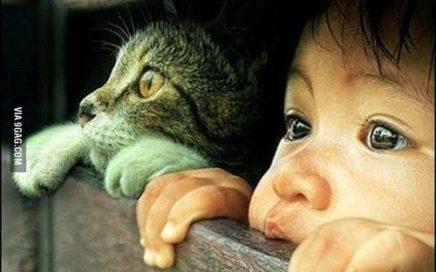 45 Soberbias imágenes de niños con gatitos